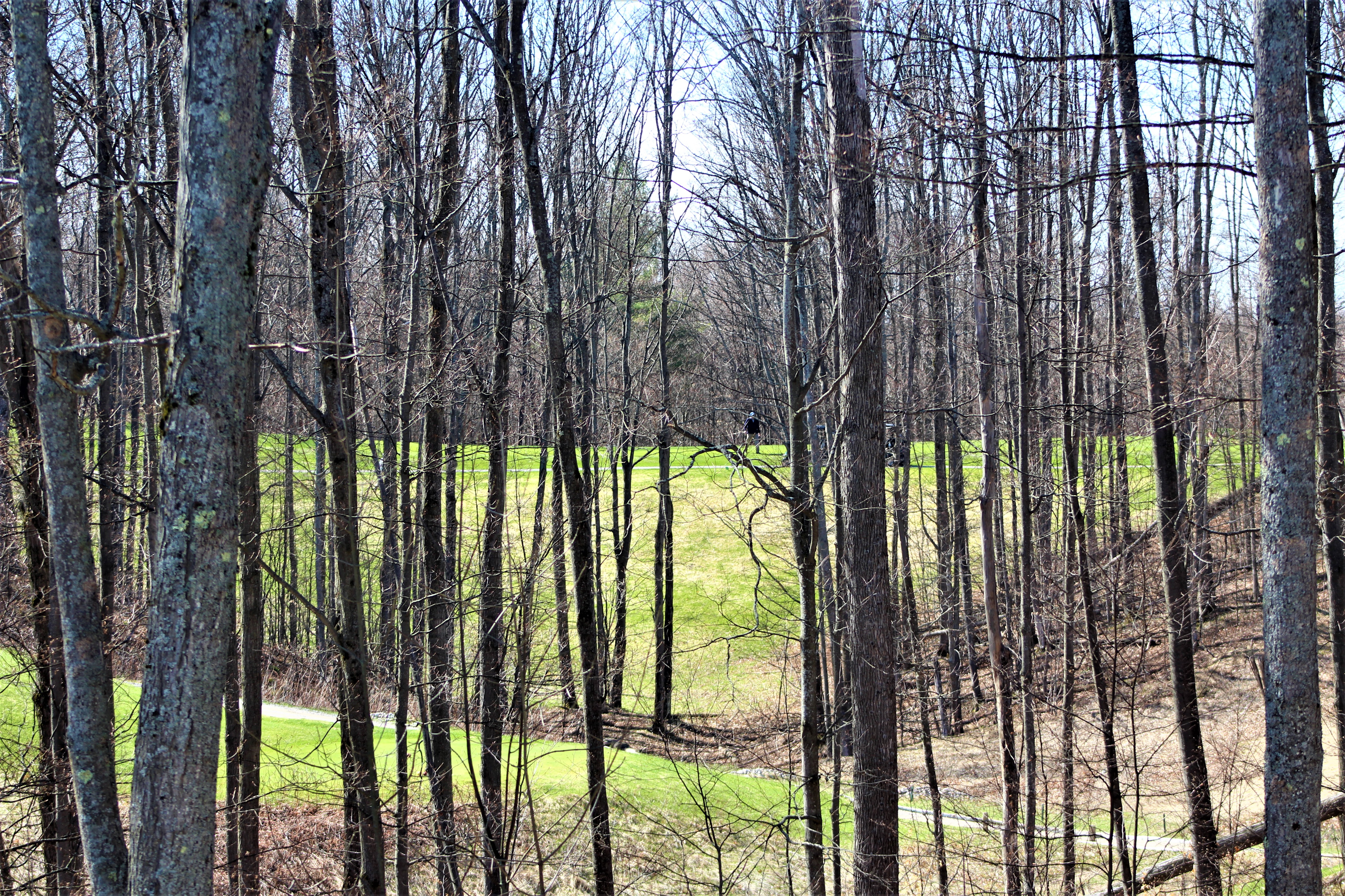 Springtime golfer Treetops May 2019